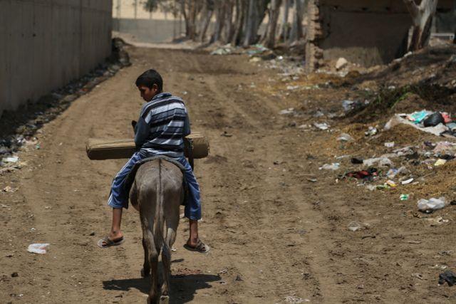 mohammed-donkey