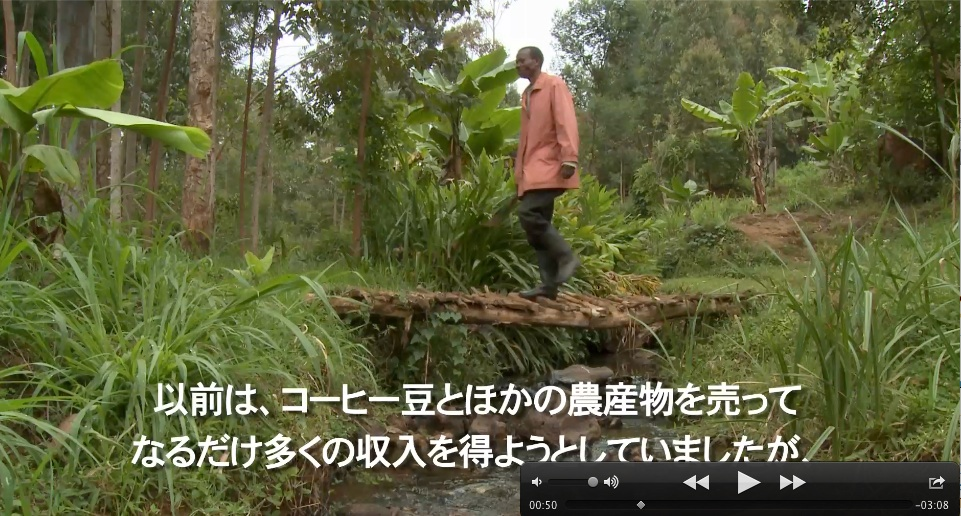 Here's a still from the Japanese version. This is Kinote crossing a stream to his coffee fields.